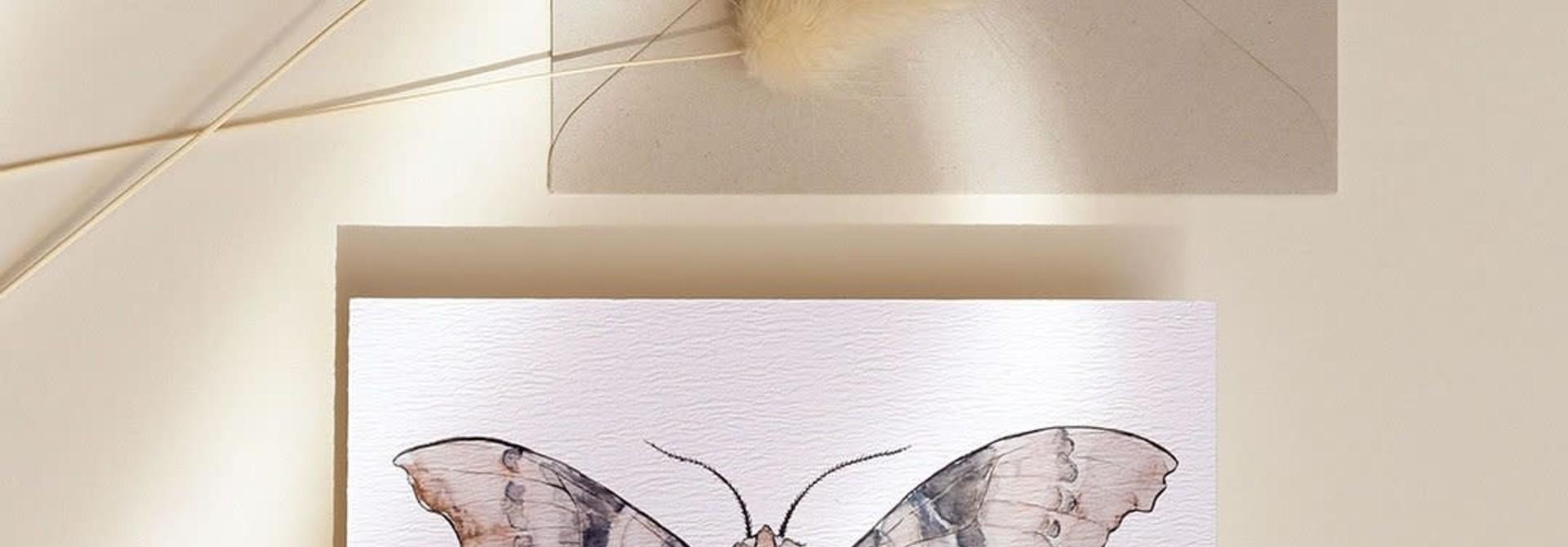 mms- Sphynx carte