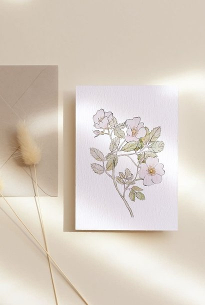 roses sauvages carte