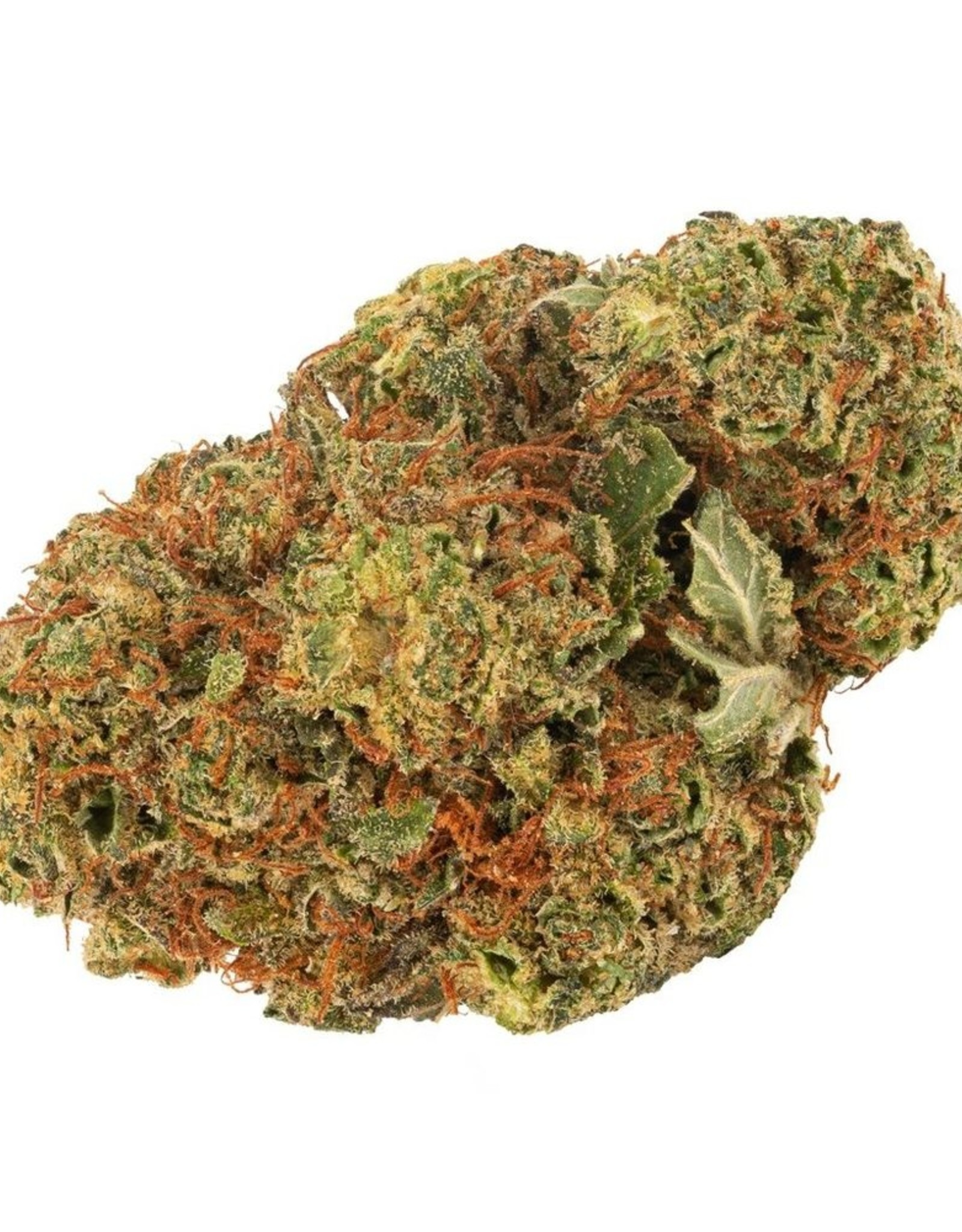 Daily Special Daily Special - Indica  3.5G