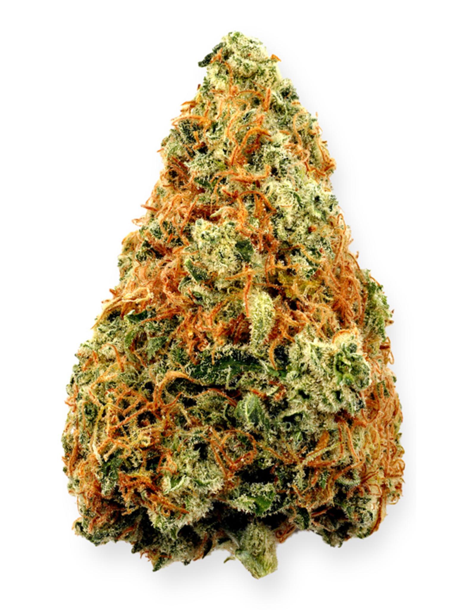 Highland Grow Highland Grow - Sensi Wizard - 1G