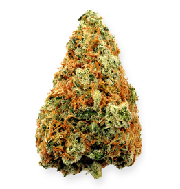 Highland Grow Highland Grow - Sensi Wizard - 1G