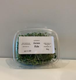 A& E Microgreens A & E Microgreens - Green Kale