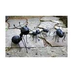 Garden Ants
