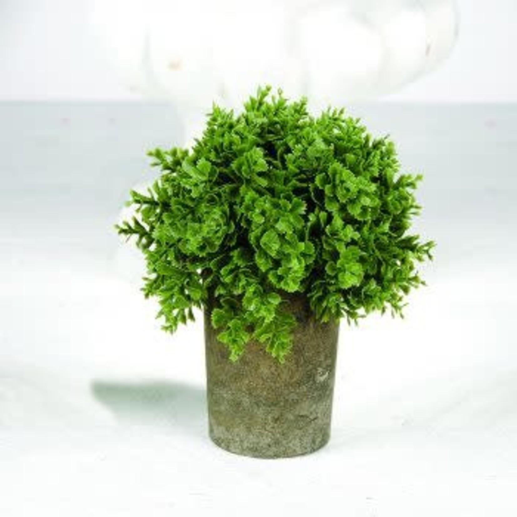 Round Succulent In Skinny Grey Pot