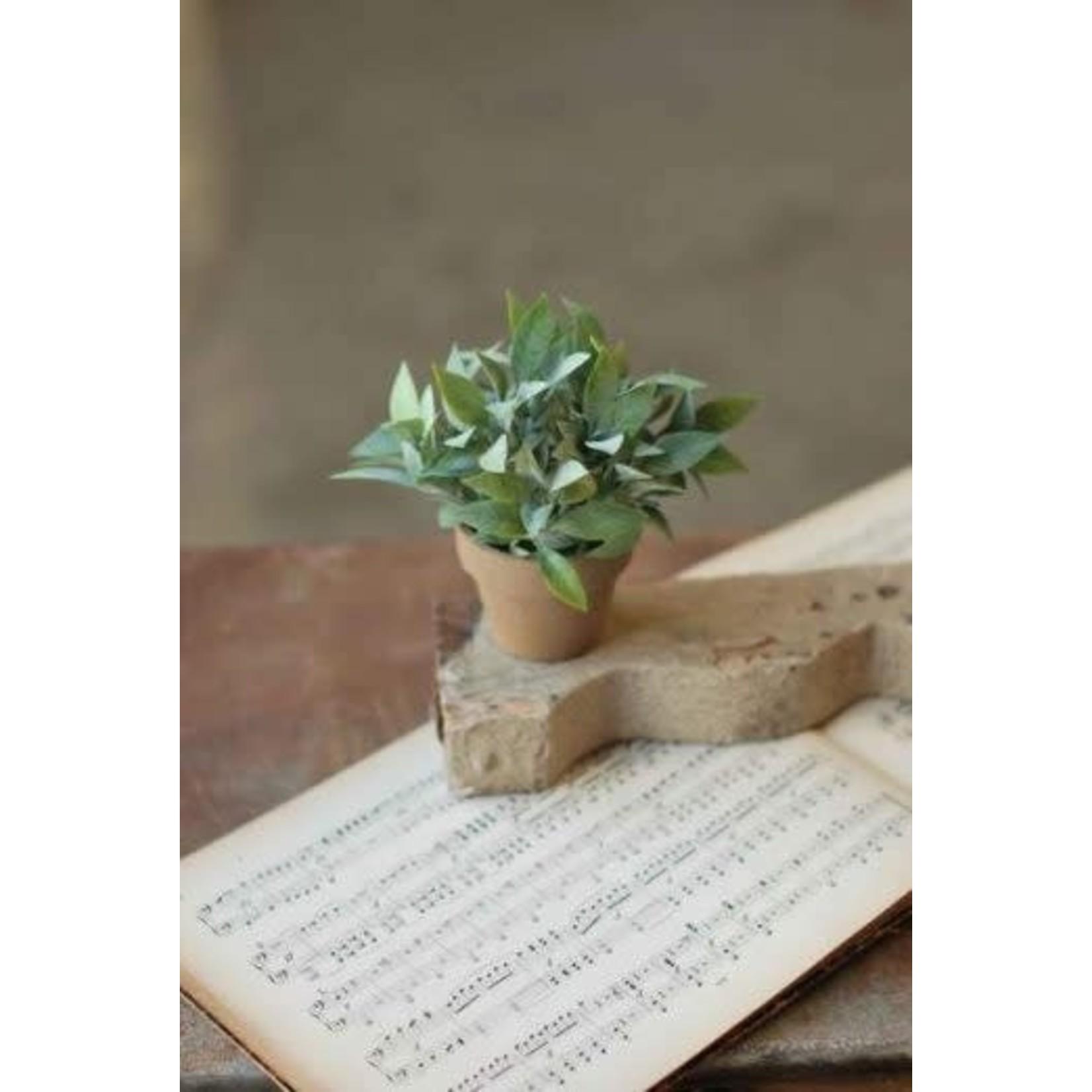 Gatehouse Herb Pot - No. 2 - Pointy Stem