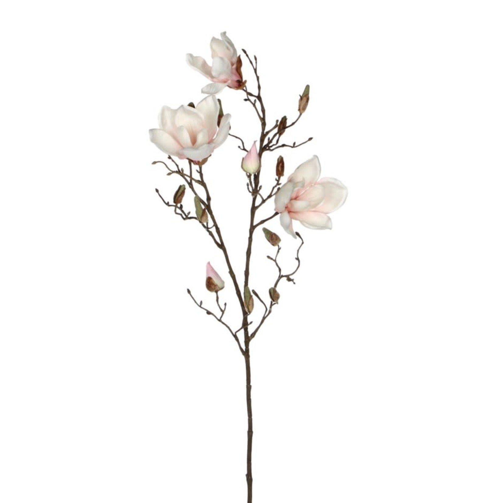 Magnolia L. Pink