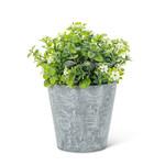 White Flowering Plant Pot