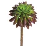 Mini Echeveria Pick