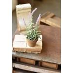 Flowering Sage Pot - Lavender