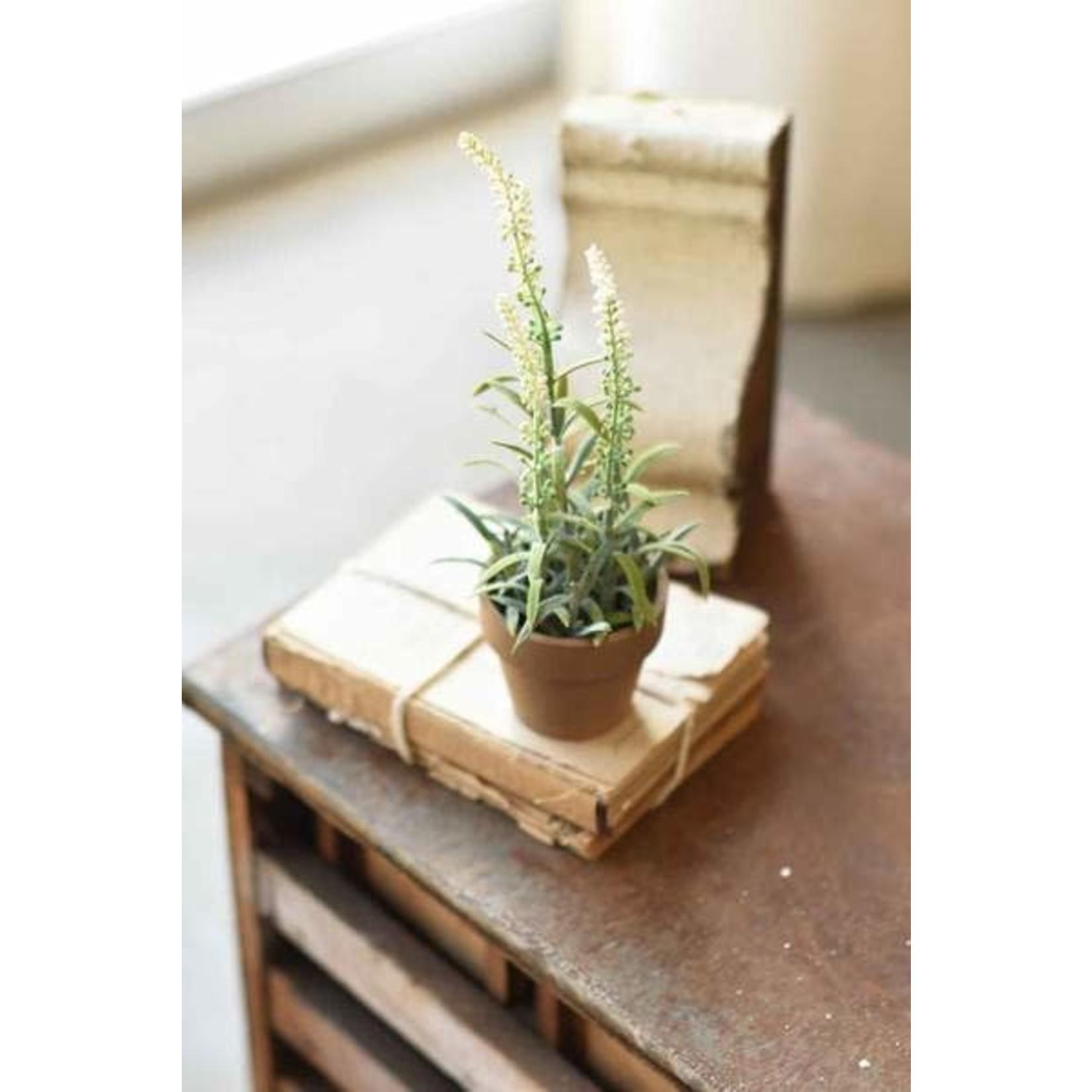 Flowering Sage Pot - White