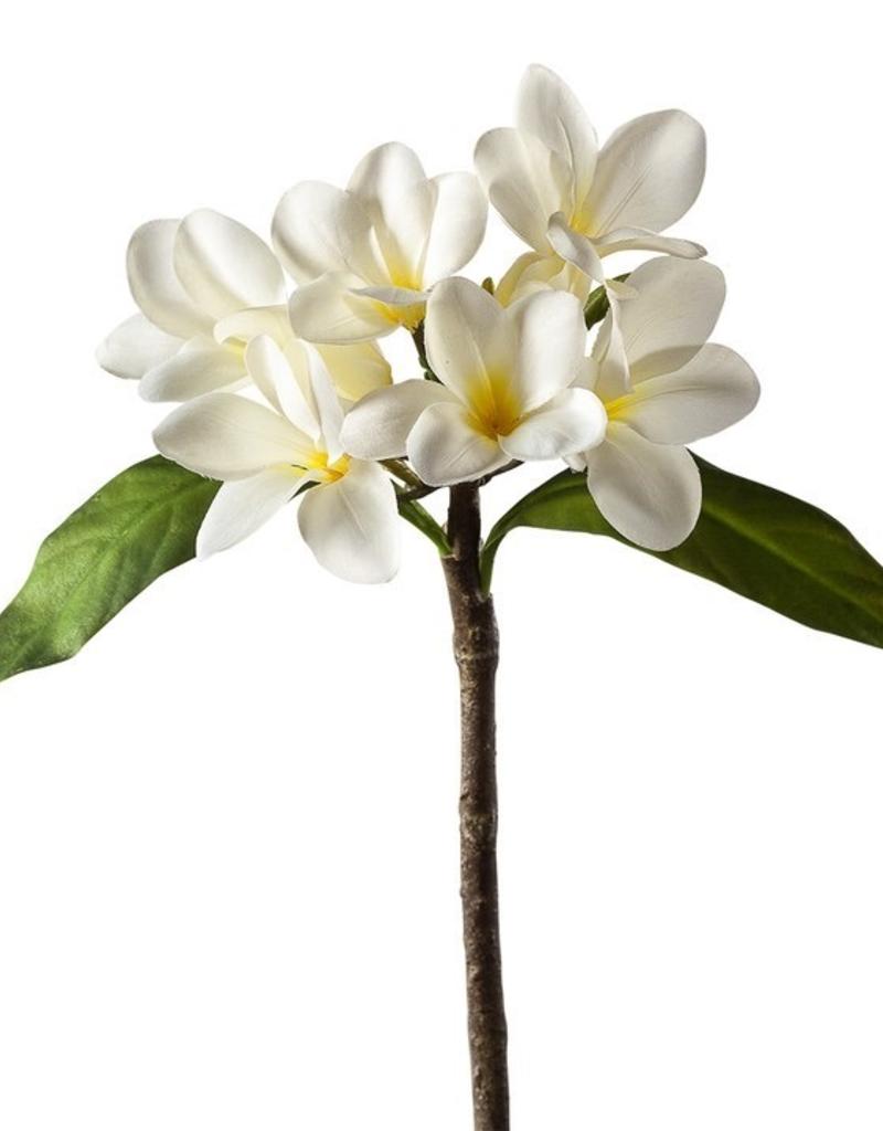 """Torre & Tagus Plumeria Multi Bloom Spray 17"""""""