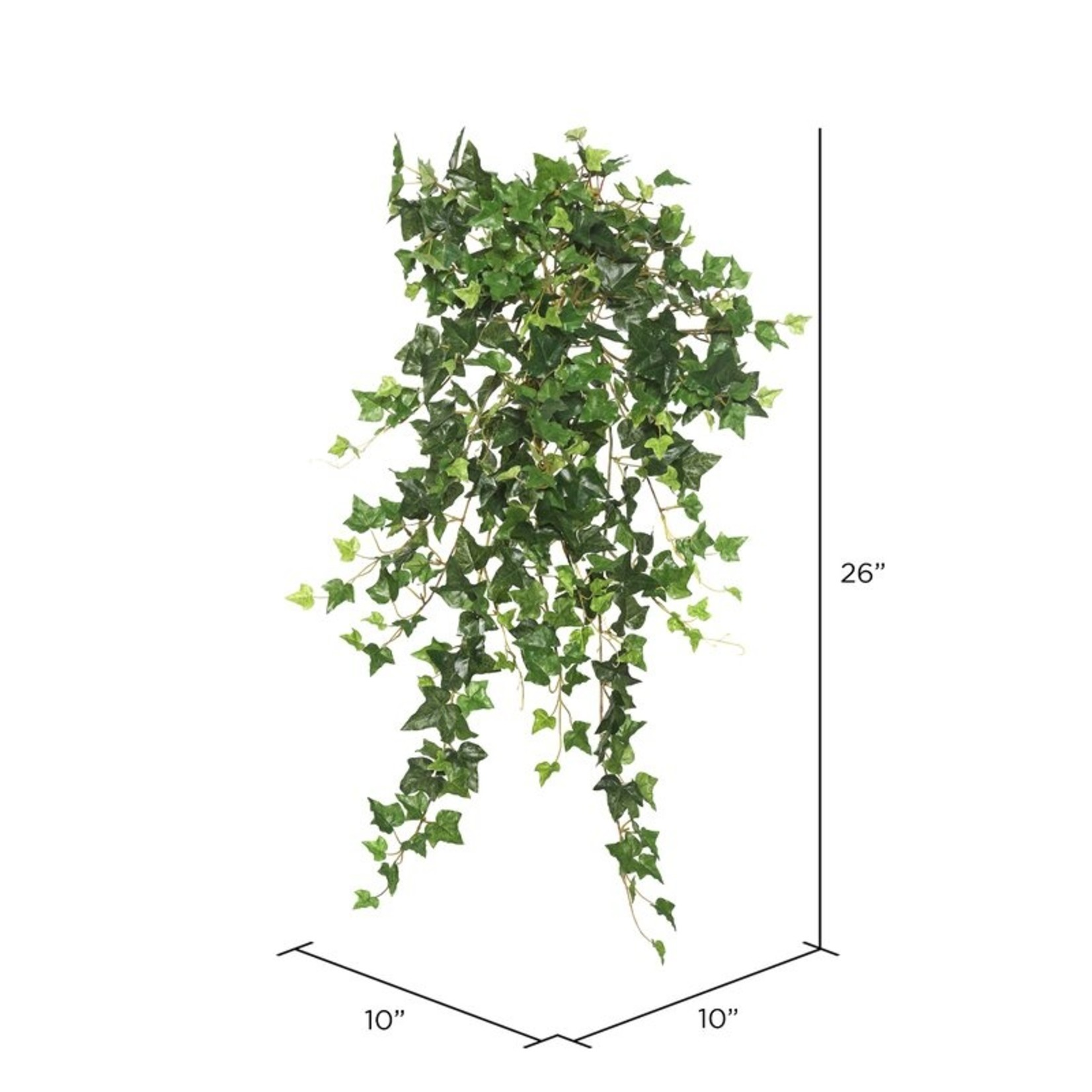 *Mini Hanging Bush Ivy Plant