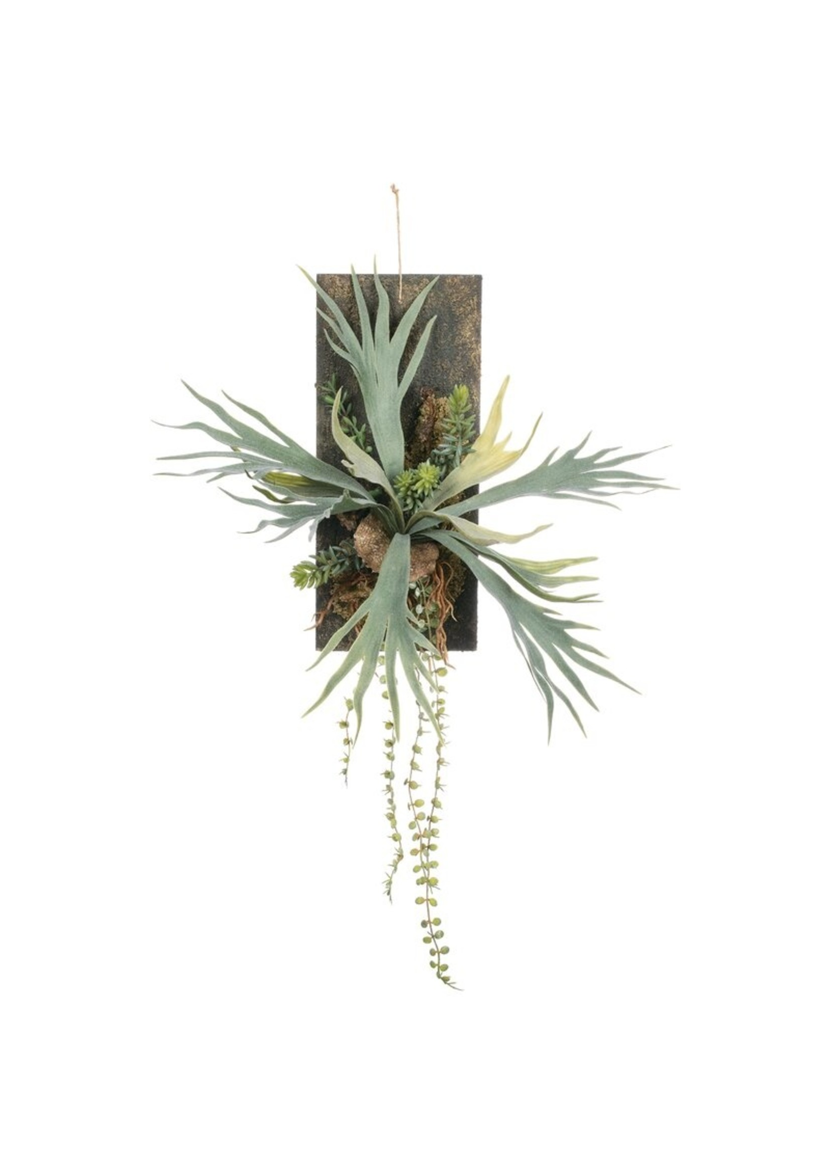 *Staghorn Wall Arrangement Fern Plant