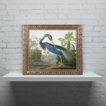 "*19.75'' H x 23.75'' W -  ""Louisiana Heron"" by John James Audubon Framed Graphic Art"