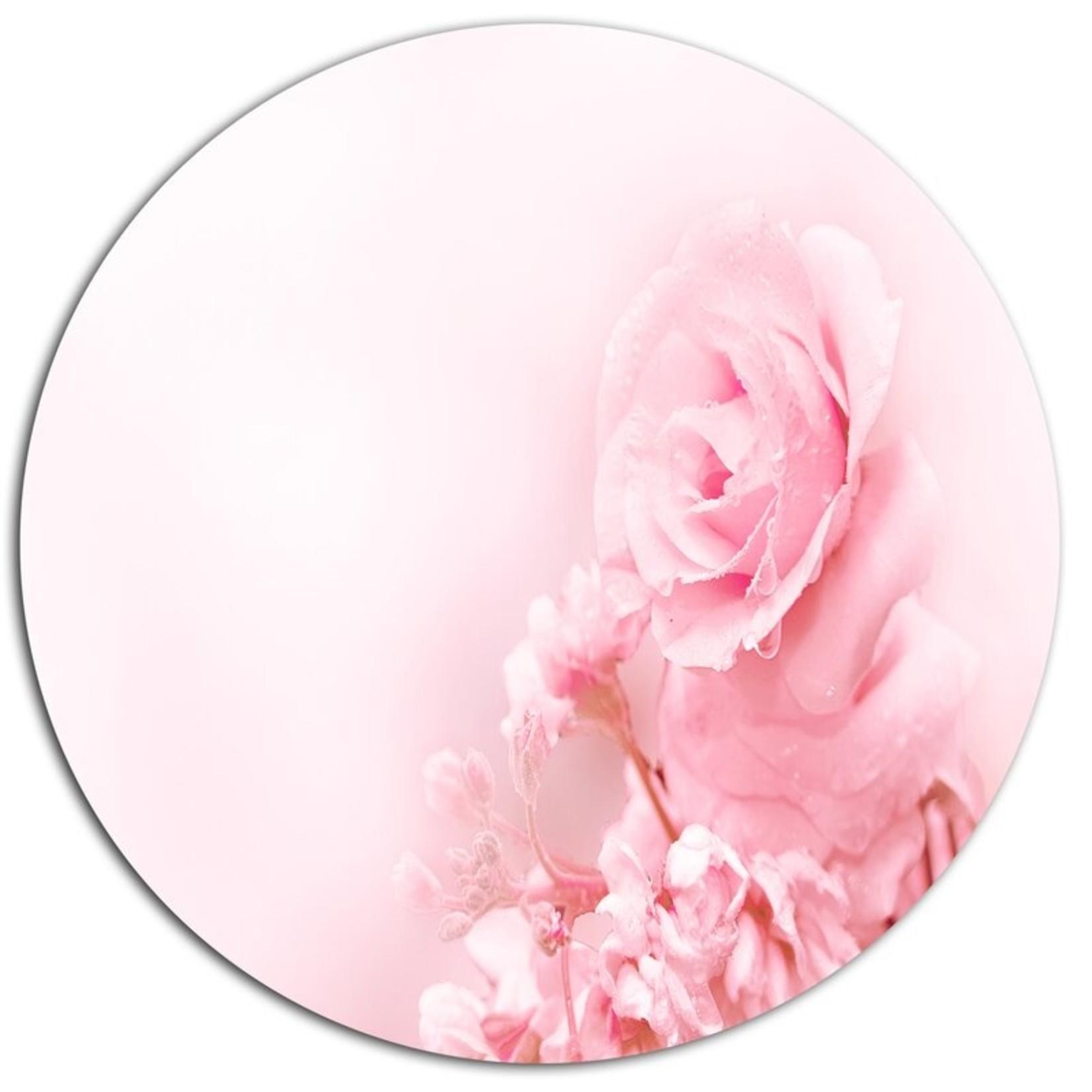 *'Beautiful Rose In Magic Light' Photographic Print on Metal