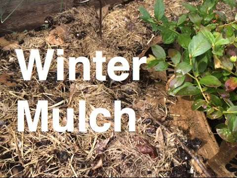 Winter Mulching – Why It's A Good Idea