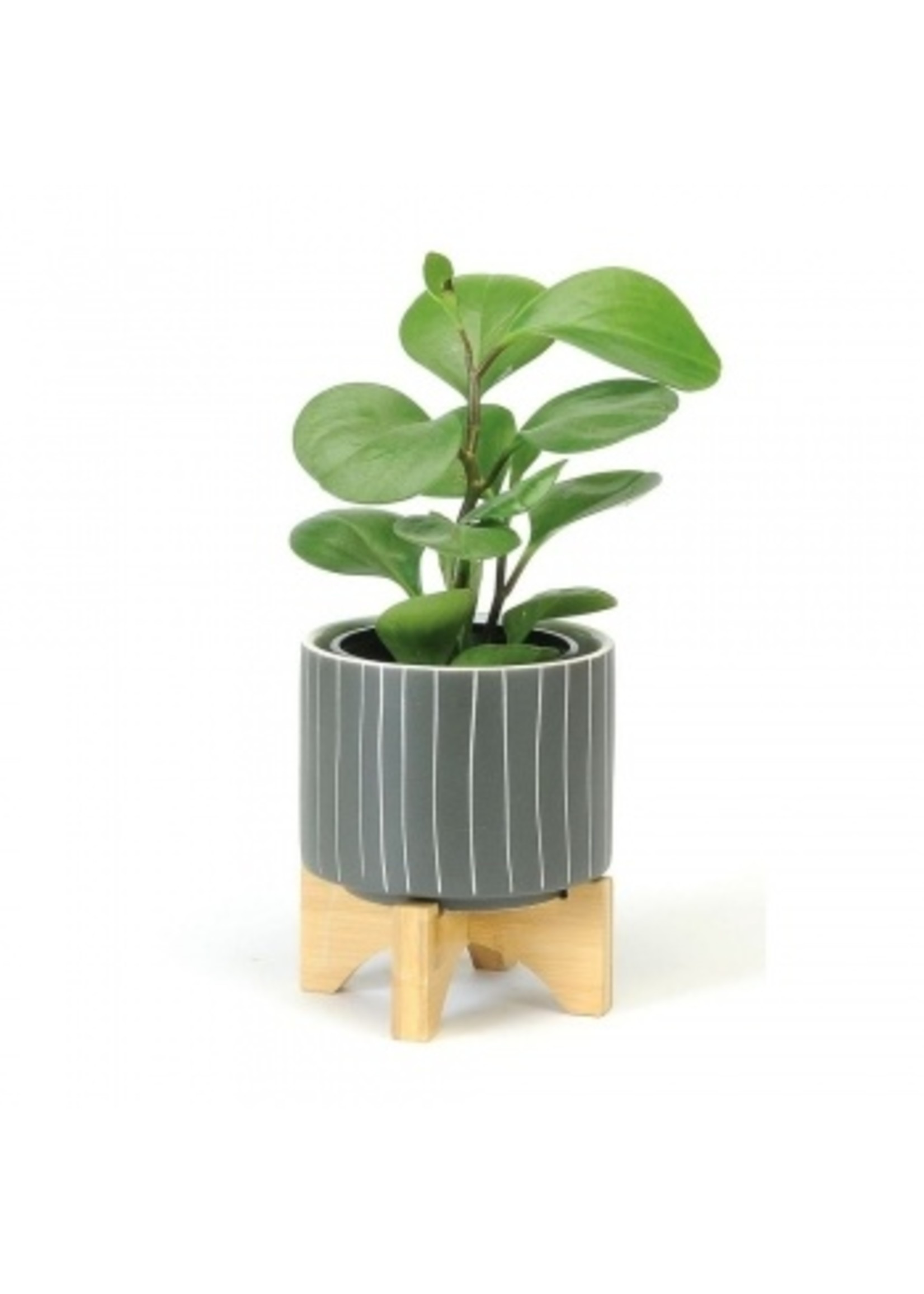 Small Dark Grey Striped Pot with Wooden Stand