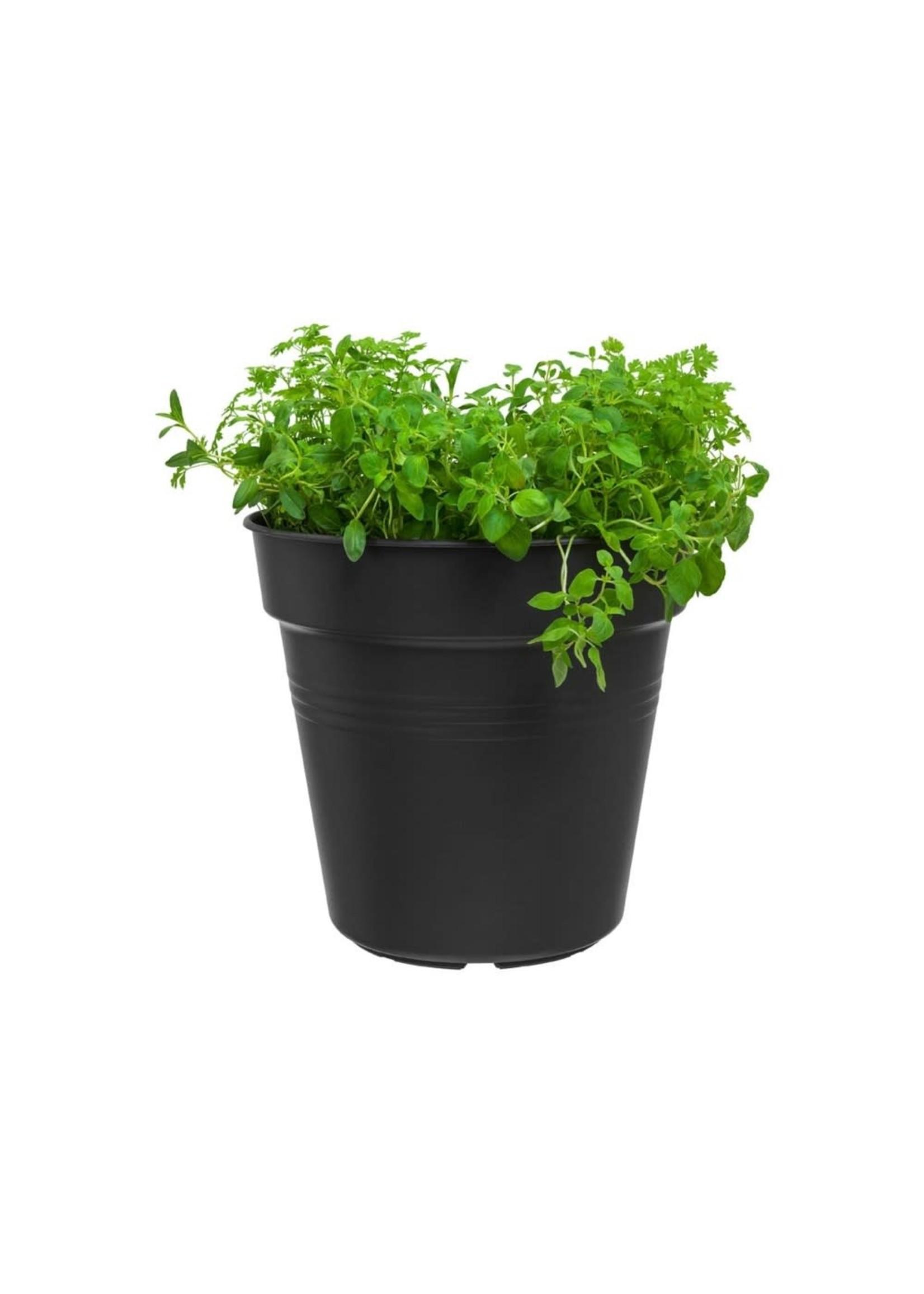 Elho Green Basics Grow Pot 19cm Black