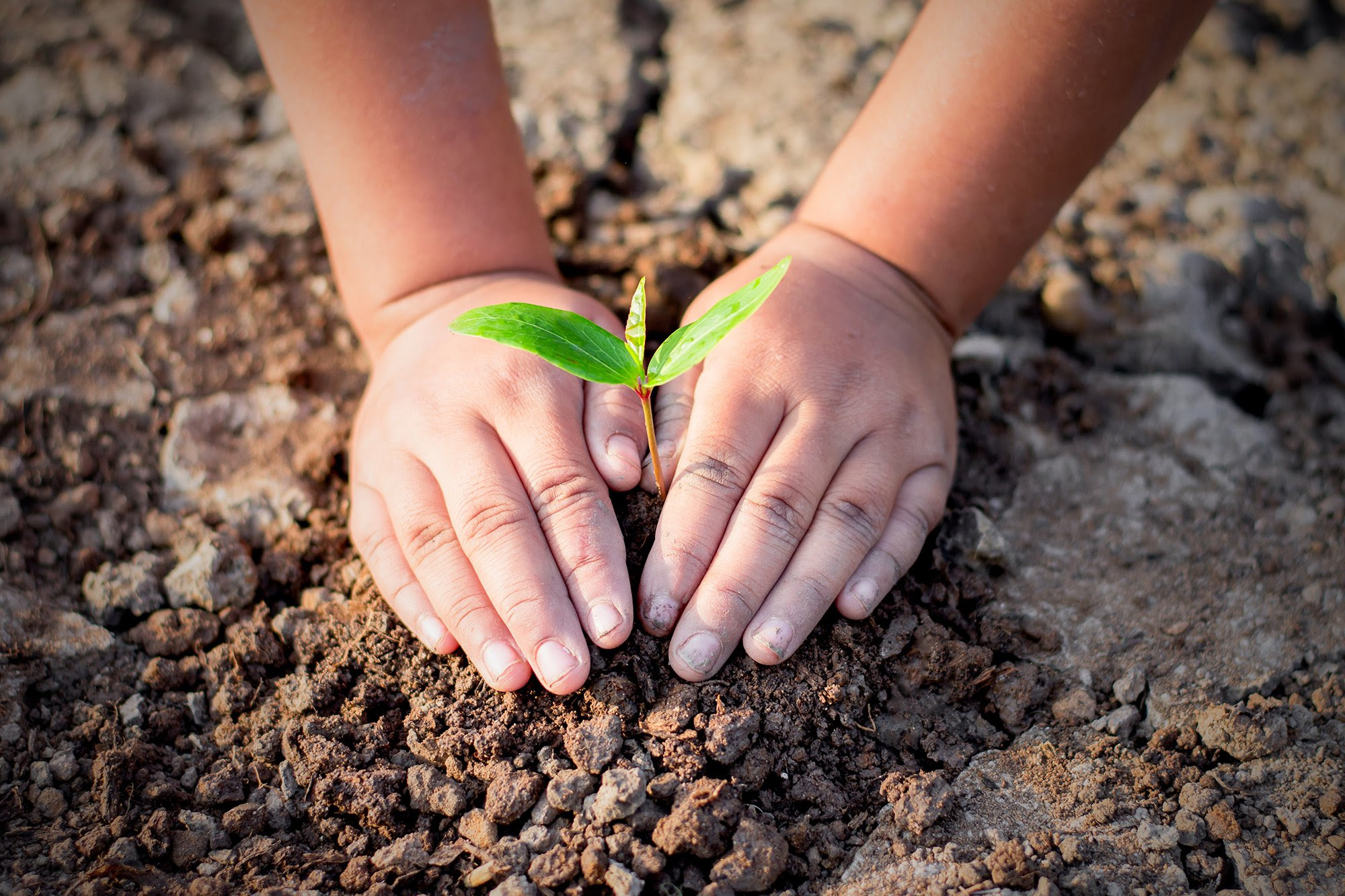 Why Is Gardening Healthy For Kids?