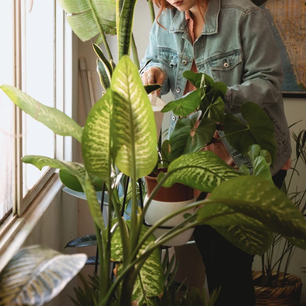 Spending Time With My Plants, The Right Way