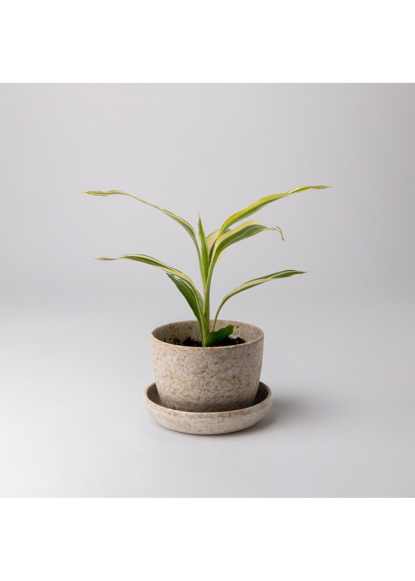 """Kanso Designs Rice Husk Planter - 3"""""""