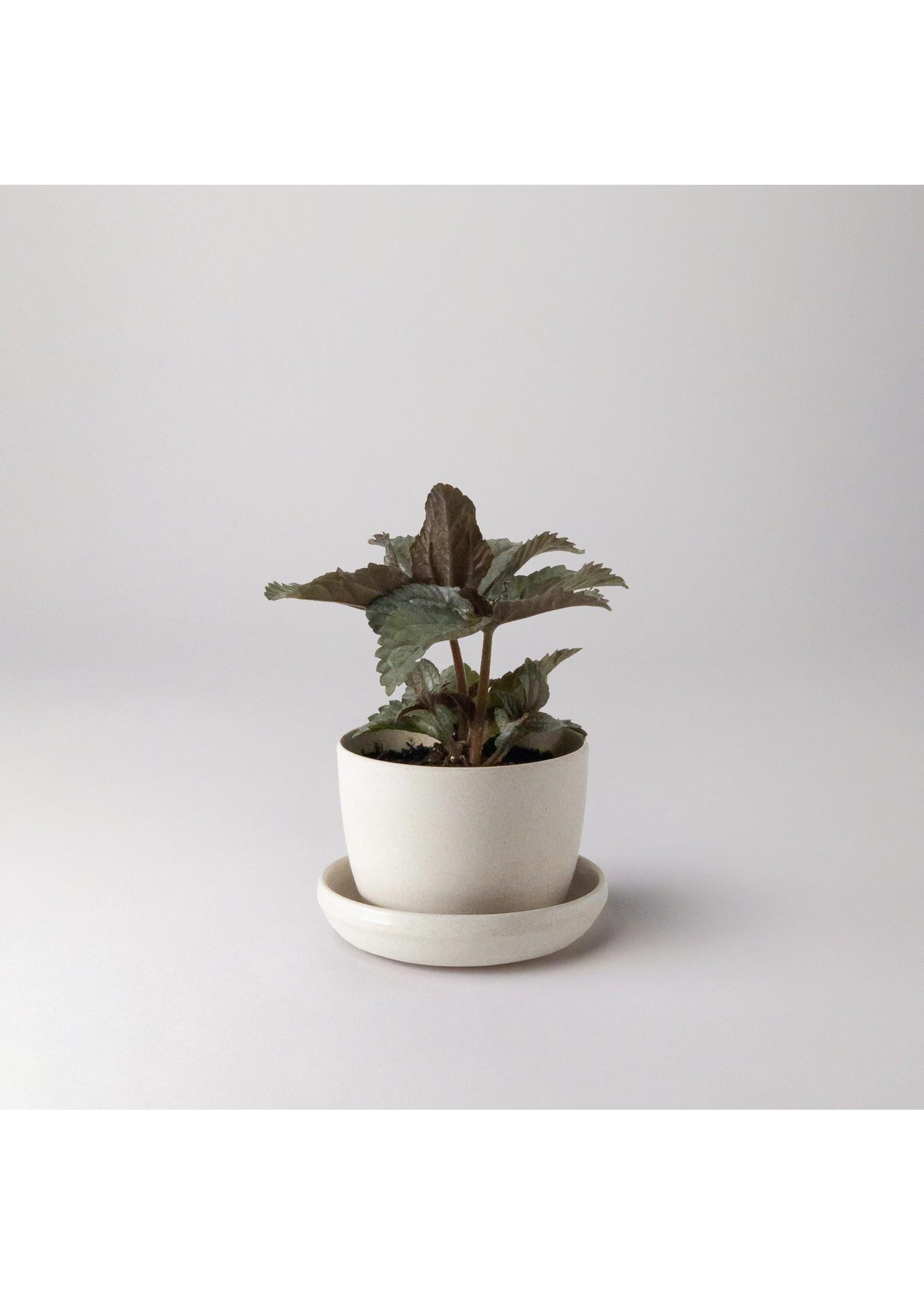 "Kanso Designs Bamboo Fibre Planter White  - 3"""