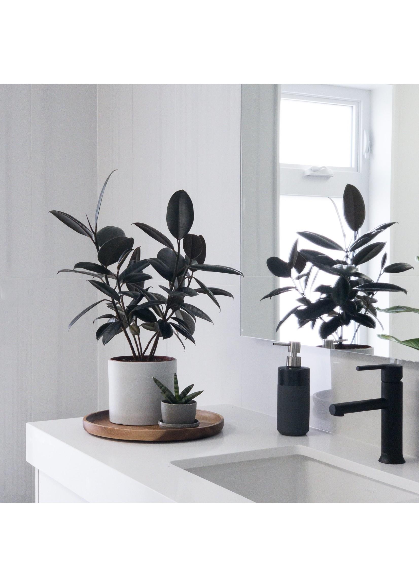"Kanso Designs Signature Stone Planter - 6"""