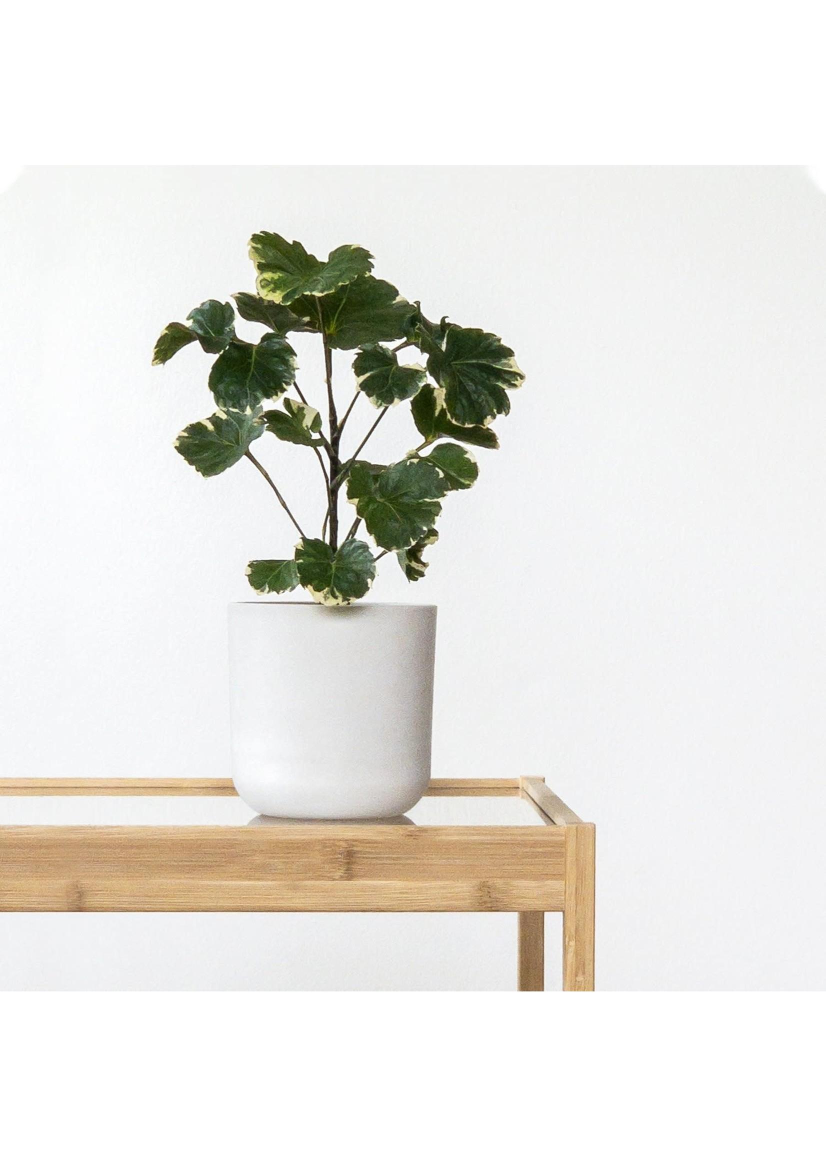 "Kanso Designs Signature Stone Planter - 4"""