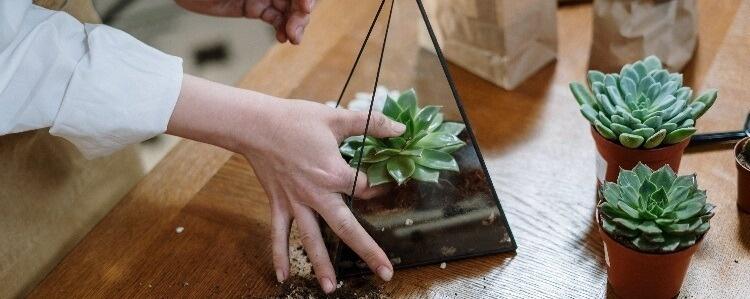 Impressive Indoor Garden Ideas