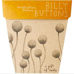 Sow 'n Sow Sow 'N Sow Gift of Seeds Billy Buttons