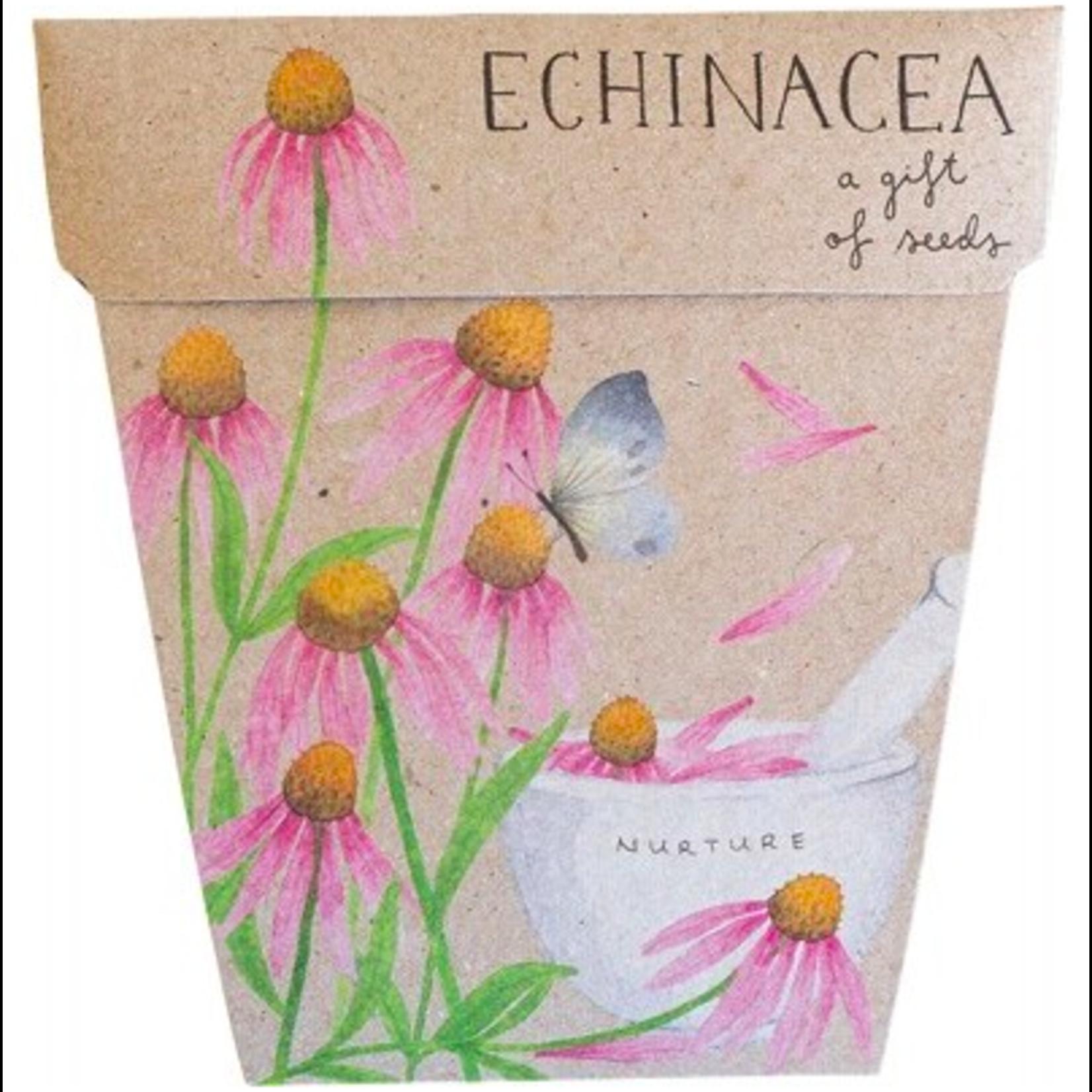 Sow 'n Sow Sow 'N Sow Gift of Seeds Echinacea
