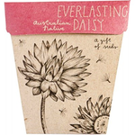 Sow 'n Sow Sow 'N Sow Gift of Seeds Everlasting Daisy