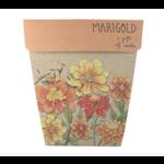 Sow 'n Sow Sow 'N Sow Gift of Seeds Marigold