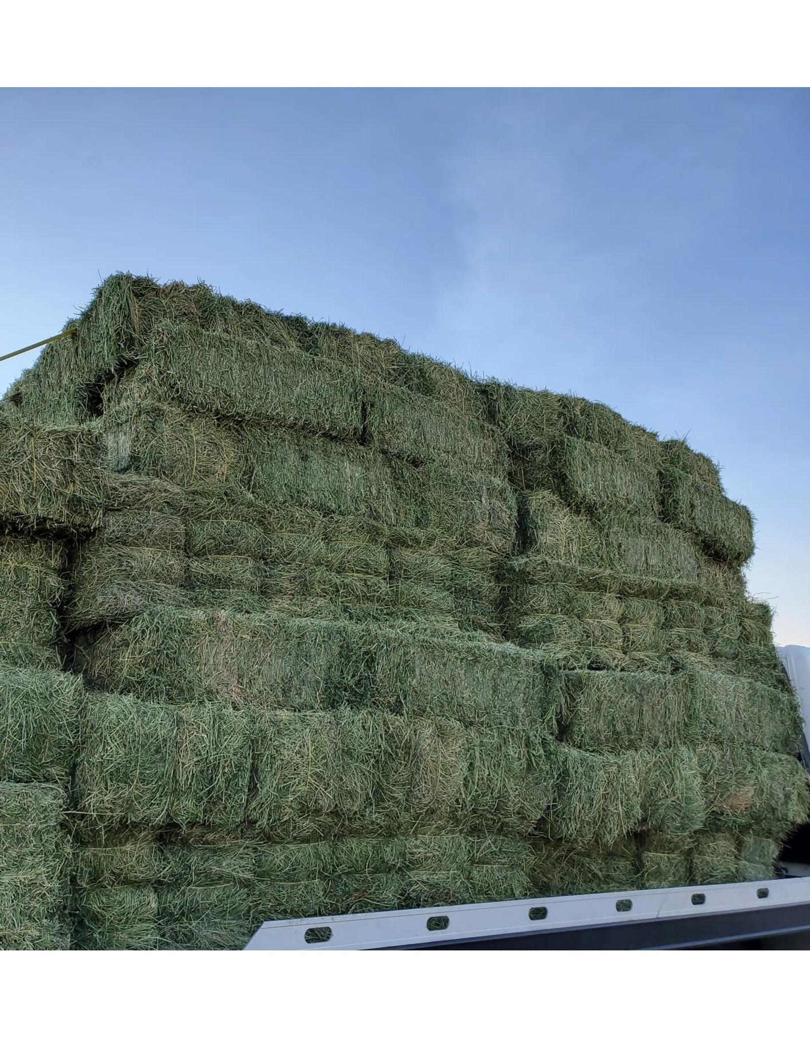 Alfalfa Bale