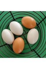 Inspire Farms Wood Nest Eggs