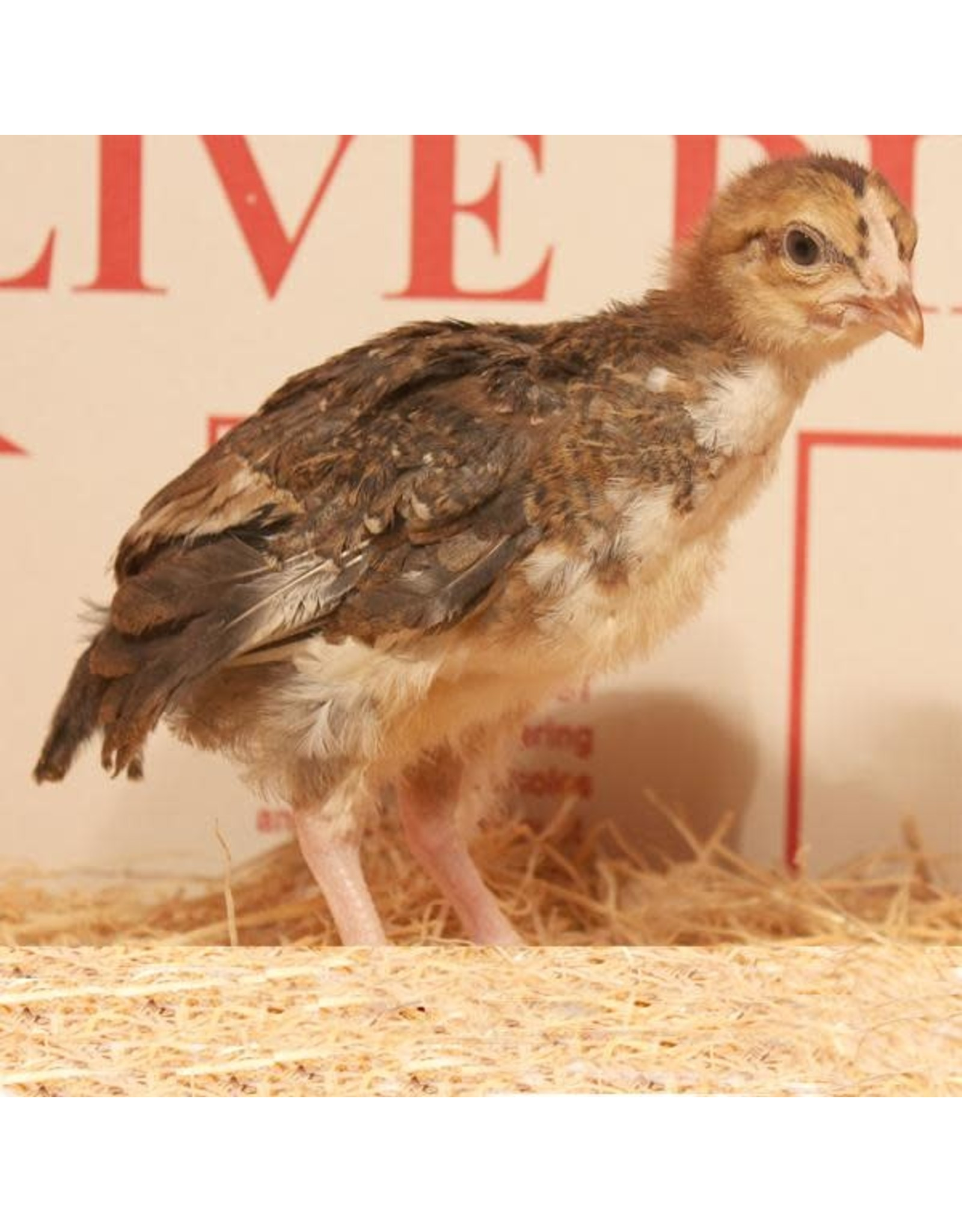Inspire Farms Speckled Sussex