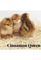 Cinnamon Queen