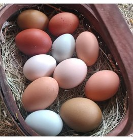 Inspire Farms Hatching Eggs