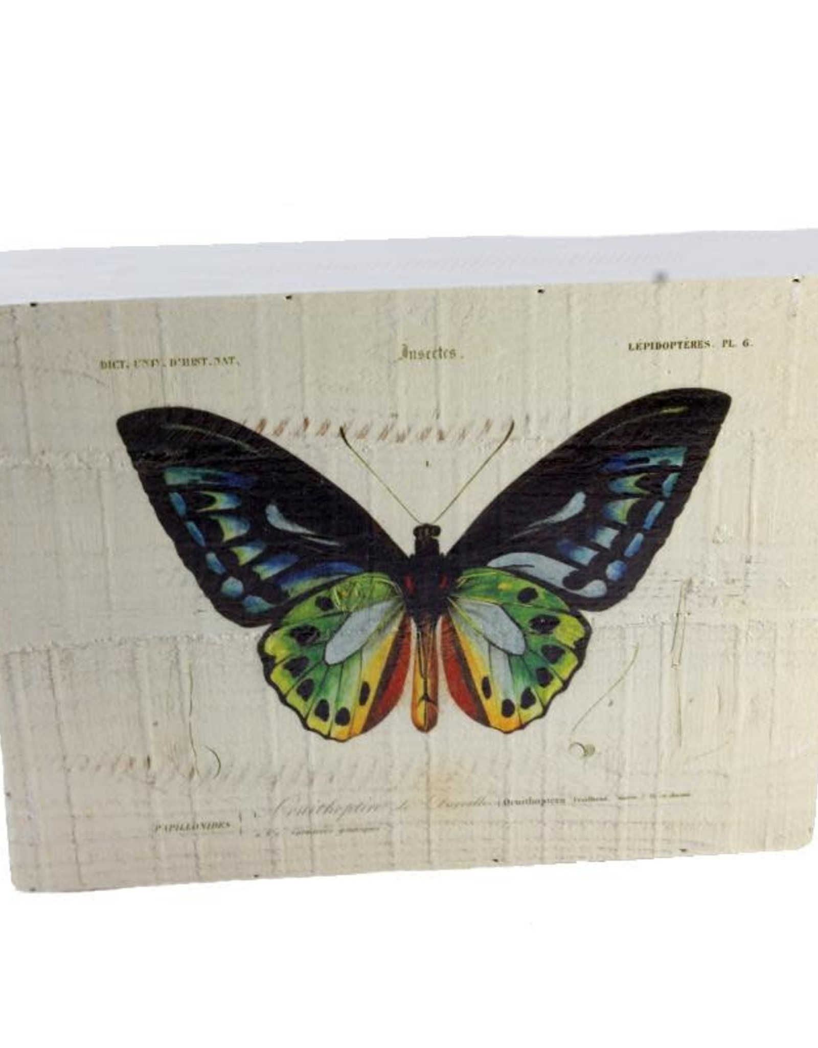 Vintage Butterfly Box Print