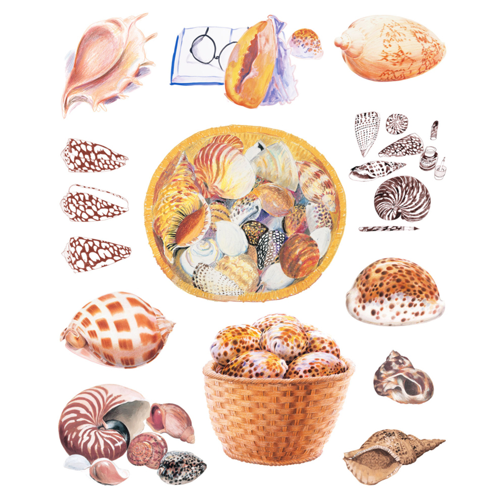 Limited Edition Prints Shell drawings, 2011