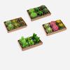 """Cactus & Succulent  T-Light, 6 Asst, Gift Box, 1.75"""" - 2.5"""""""