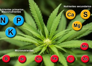 Plant Propagation Nutrition and Health
