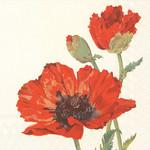 Abbott Red Poppy Paper Napkin