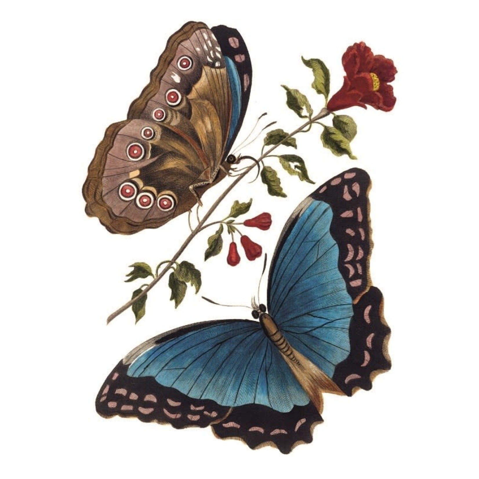 Museums and Galleries Azure Blue Butterfly card