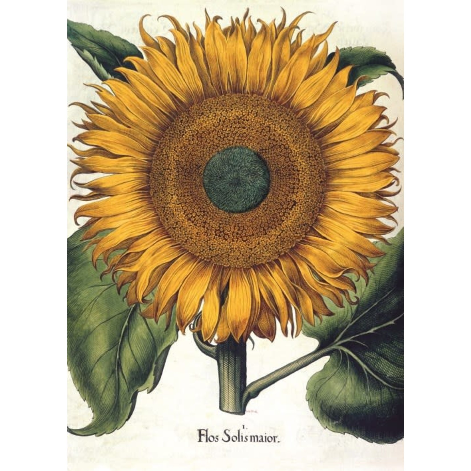 Museums and Galleries Sunflower Card