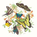 Museums and Galleries North American Butterflies card