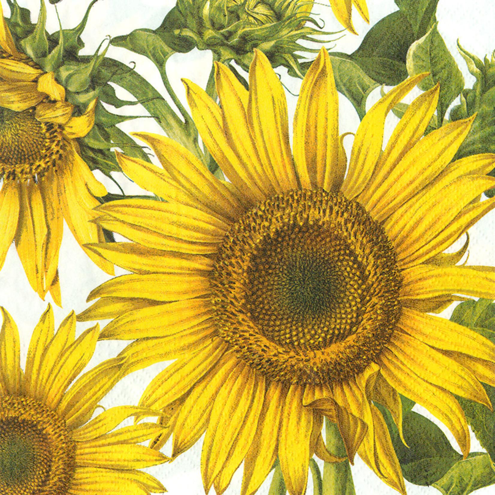 Abbott Abbott Sunflower Paper Napkins