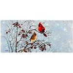 Sassafras Winter Cardinals