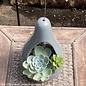 Tropical 4hb Nidos Planter w/ Succulents