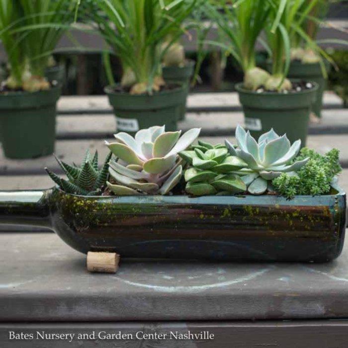 Tropical Wine Bottle Planter w/ Succulents